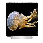 The Spotted Jelly Or Lagoon Jelly Mastigias Papua Shower Curtain