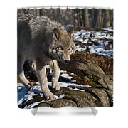 Timber Wolf Shower Curtain
