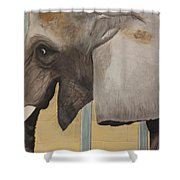 Titus Shower Curtain by Patrick Kelly