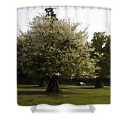 Tree With Large White Flowers Shower Curtain