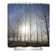 Trees On A Foggy Field Shower Curtain