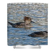Trio Of Hooded Mergansers Shower Curtain