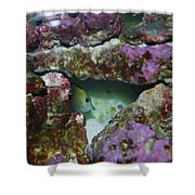 Tropical Fish In Cave Shower Curtain