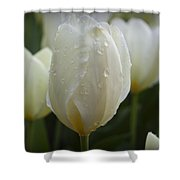 Tulips Shower Curtain
