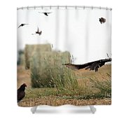 Turkey Vultures Shower Curtain