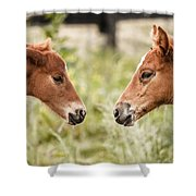 Two Colts Shower Curtain