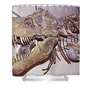 Tyrannosaurus Rex Shower Curtain