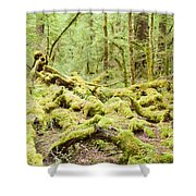 Virgin Rainforest Wilderness Of Fiordland Np Nz Shower Curtain