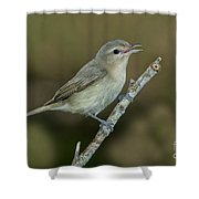 Warbling Vireo Shower Curtain