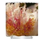White And Pink Peony 2 Shower Curtain