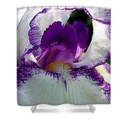 White And Purple Iris 2 Shower Curtain