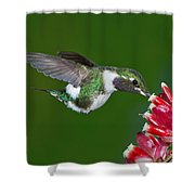 White-bellied Woodstar Shower Curtain