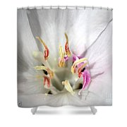 White Godetia From The Satin Mix Shower Curtain