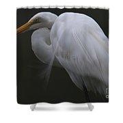 White Heron Portrait Shower Curtain