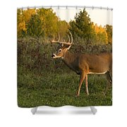 White-tailed Buck In Fall Shower Curtain