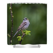 Whitecrowned Sparrow Shower Curtain