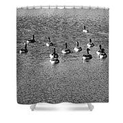 Wild Birds And Pond Shower Curtain
