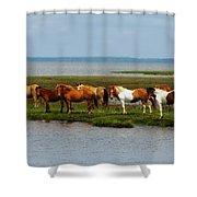 Wild Horses Of Assateague Island Shower Curtain