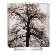 Winter Tree In Fog Shower Curtain