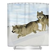 Wolves In Winter Shower Curtain