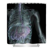 X-ray Anatomy Shower Curtain