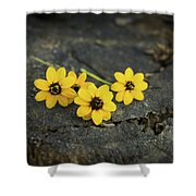 3 Yellow Flowers Shower Curtain by Aged Pixel