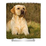 Yellow Labrador Shower Curtain