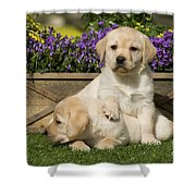 Yellow Labrador Puppies Shower Curtain