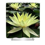 3 Yellow Lotus Shower Curtain