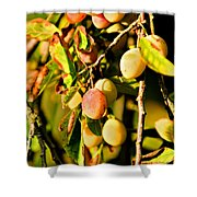 Yellow Plums Shower Curtain