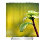 Yellow Sedum Shower Curtain