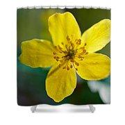 Yellow Wood Anemone Shower Curtain