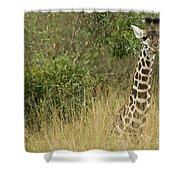 Young Giraffe In Kenya Shower Curtain