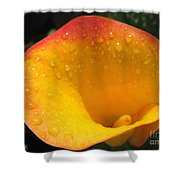 Zantedeschia Named Flame Shower Curtain