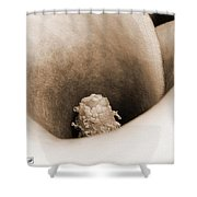 Zantedeschia Named Picasso Shower Curtain