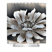Zinnia From The Whirligig Mix Shower Curtain