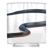 Australian Reptiles On White Shower Curtain
