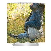 Western Lowland Gorilla Shower Curtain