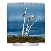 30914-37 A Harsh Climate Shower Curtain