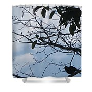 Camera Peak Thru Nature Buy Faa Print Products Or Down Load For Self Printing Navin Joshi Rights Man Shower Curtain