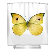 32 Dercas Lycorias Butterfly Shower Curtain