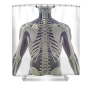 Bones Of The Upper Body Shower Curtain