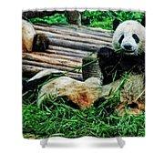 3722-panda -  Acanthus Sl Shower Curtain