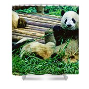 3722-panda -  Colored Photo 1 Shower Curtain