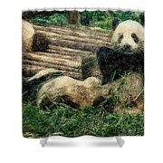 3722-panda -  Colored Photo 2 Shower Curtain