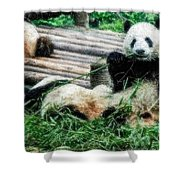 3722-panda -  Embossed Sl Shower Curtain