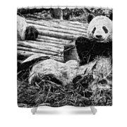 3722-panda -  Graphite Drawing 2 Sl Shower Curtain