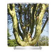 3d Urban Fever Tree Shower Curtain