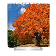 A Blanket Of Fall Colors Shower Curtain