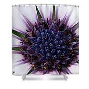 African Daisy Named Soprano White Shower Curtain
